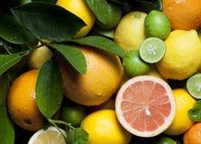 Pampelmusen-Orangen-Zitronen-Kalke stockbilder