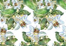 Pampelmusenblume, Aquarell, kopieren nahtloses Stockfoto