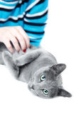 Pampering cat Stock Image