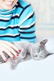 Pampering o gato Fotografia de Stock