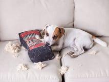 Pampering psa w domu obrazy stock
