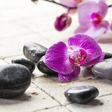 Pampering treatment with zen in mind Royalty Free Stock Images
