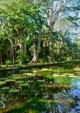 Pamplemousse美丽如画的庭院在毛里求斯共和国的 免版税图库摄影