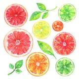 Pamplemousse d'aquarelle, orange, citron, kumquat, chaux et feuilles vertes sur le fond blanc illustration de vecteur