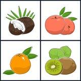 Pamplemousse, pêche, kiwi, noix de coco illustration de vecteur
