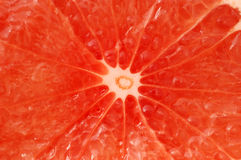 Pamplemousse rouge Photographie stock libre de droits
