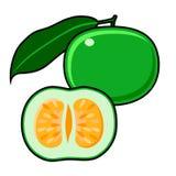 Pamplemousse vert illustration stock