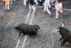 PAMPLONA, SPAIN -JULY 8: Bulls run down the street Royalty Free Stock Images