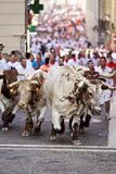PAMPLONA, SPAIN-JULY 9: Bulls running in street during San Fermi Royalty Free Stock Image
