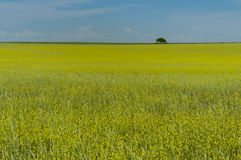 Pampors landskap, La Pampa, Royaltyfria Bilder