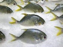 Pampus-argenteus frisch auf Eis für Verkauf im Markt stockfotografie