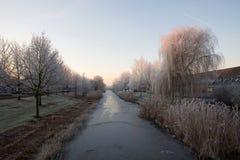 Pampushout阿尔梅勒在树冰盖的荷兰, Pampushout 库存照片
