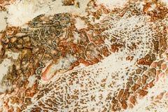 Pamukkale - castelo do algodão - sistema estranho de reservatórios com paredes da pedra calcária imagens de stock royalty free