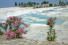 pamukkale springs thermalen Royaltyfri Fotografi