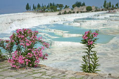 Pamukkale thermal springs Royalty Free Stock Photography