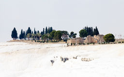 Pamukkale Travertines Royalty Free Stock Photos
