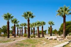 Pamukkale, Turkey, palms Stock Image