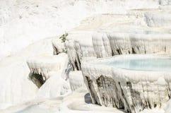 Pamukkales terrasser Royaltyfri Fotografi