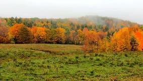 Pan Across Fog Blowing In à travers Hillside vibrant pendant les couleurs d'automne au Vermont banque de vidéos