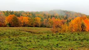 Pan Across Fog Blowing In a través de la ladera vibrante durante colores de la caída en Vermont almacen de metraje de vídeo