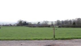 Pan Along Countryside Path sistema il cielo blu degli alberi - ambiti di provenienza inglesi selvaggi naturali archivi video