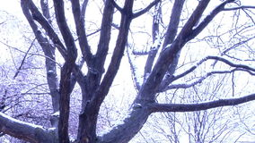Pan around snow covered trees. Video of pan around snow covered trees stock footage