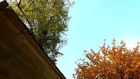 Pan from autumn tree to falling leaves. And sky stock footage