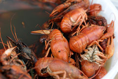 Pan with boiled crayfish Stock Photo