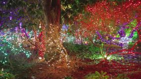 Pan - a colorful light at Vandusen botanical gardens. VANCOUVER,CANADA - CIRCA December 2014 :pan - a colorful light at Vandusen botanical gardens stock video footage