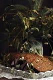 Pan de jengibre y muérdago de la Navidad Foto de archivo