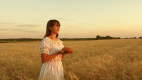 Pan delicioso en las palmas de una mujer joven la muchacha sostiene el pan en sus palmas y va a través del campo del trigo maduro almacen de metraje de vídeo