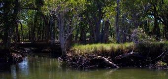 Pan des Mangrovenflussrandes stock video