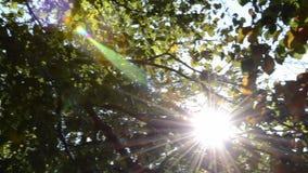 Pan door treetops met zonnestralen en lensgloed stock videobeelden