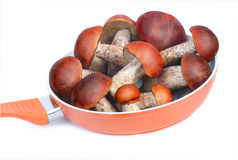 The pan filled with mushrooms intended for cooking.Photographed Royalty Free Stock Photos