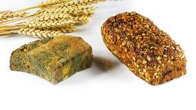 Pan fresco del grano y un pedazo de pan negro con los oídos del molde verde del trigo aislados en el fondo blanco, concepto de pr foto de archivo