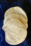 Pan fresco del pitta Fotos de archivo