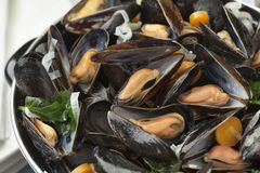 Pan with fresh cooked mussels Royalty Free Stock Photography