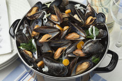 Pan with fresh cooked mussels Stock Photo