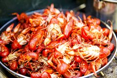 Pan of freshly cooked freshwater crawdads royalty free stock images