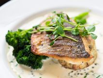 Pan fried fish with vegetables. Restaurant dish. Fish dish with vegetables and creamy sauce served on a white plate. Restaurant special royalty free stock photography