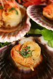 Pan Fried Scallops Royalty Free Stock Photo