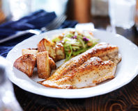 Pan fried tilapia Stock Photography