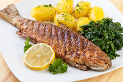 Pan Fried Trout Royalty Free Stock Photos