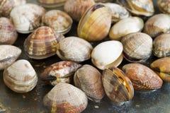 Pan frying clams Royalty Free Stock Image