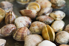 Pan frying clams Royalty Free Stock Photography