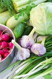 Pan full of radishes and garlic. Garlic and radishes in the stainless steel pan, celery stalks, chervil and cabbage, squashes spring onion and green garlic, dill Royalty Free Stock Image