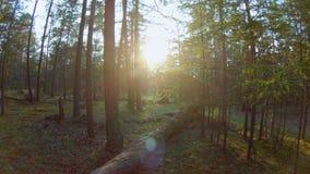 Pan in het bos stock videobeelden