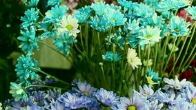 Pan over beautiful flowers in flower shop. stock footage