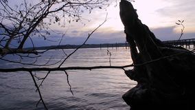 Pan pier to tree landscape. Panning from pier on right across driftwood to tree on left at sunset stock footage