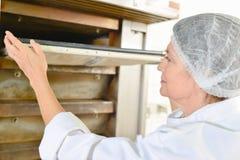 Pan que viene hacia fuera horno Fotos de archivo